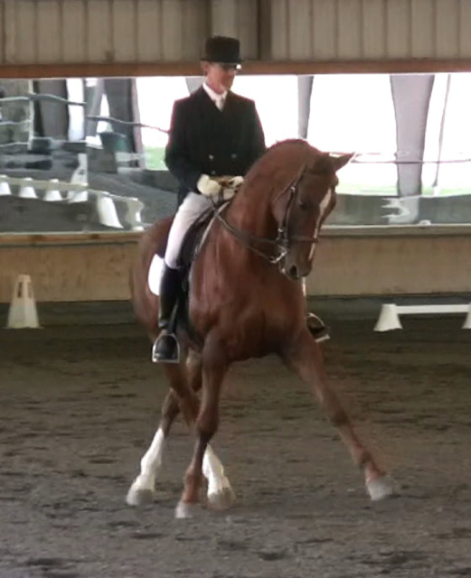 Raconteur GP dressage horse
